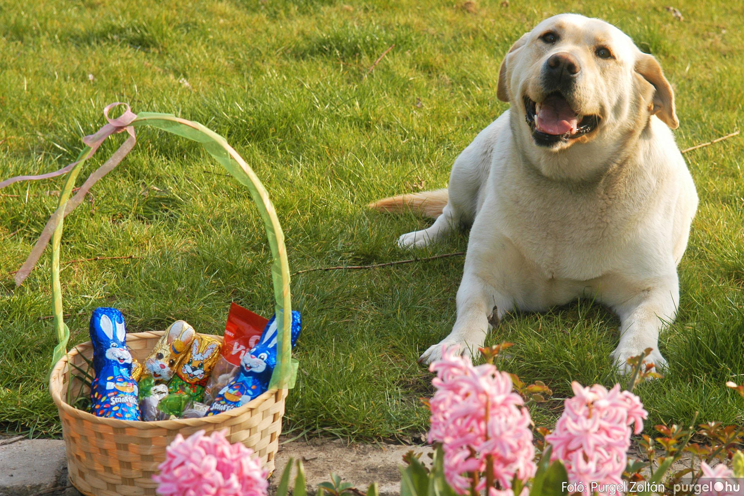 Kijárási tilalom kutyáknak