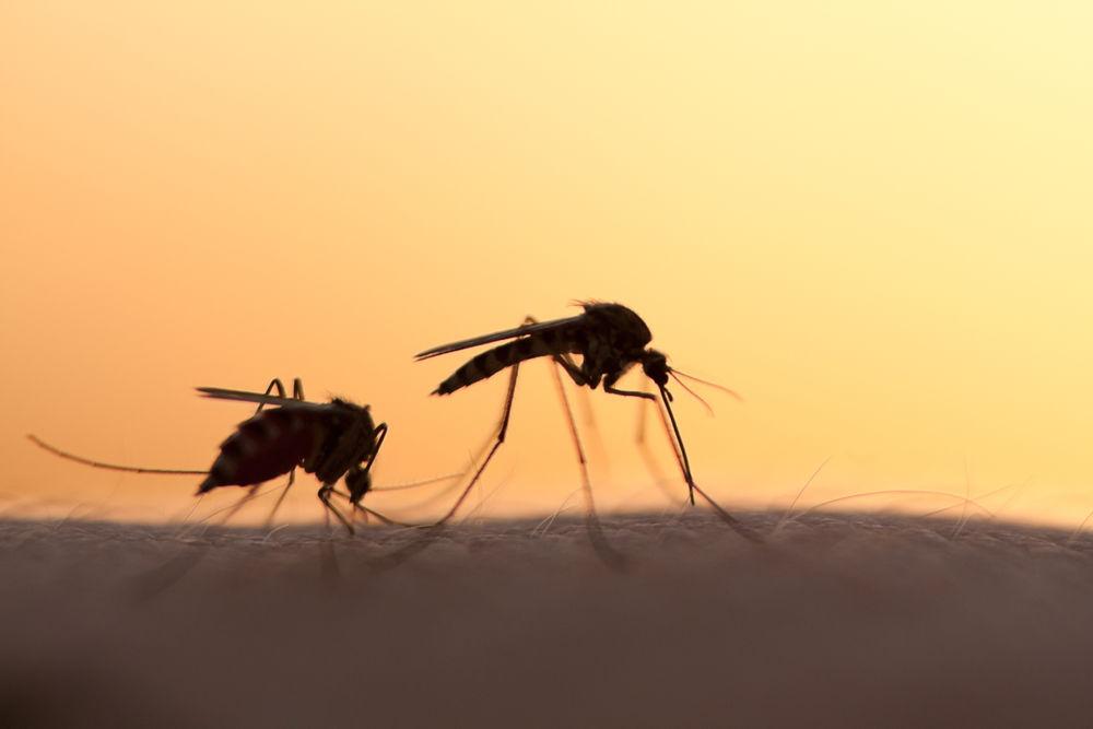 Újabb szúnyoggyérítés